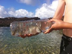 Make your own Fish Trap using a juice bottle. Definitely doing this with the kids next time we go camping!