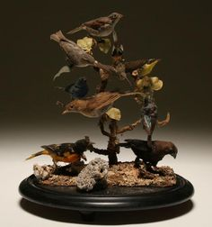 Victorian taxidermy; ten assorted birds mounted in natural setting