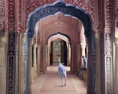 karen knorr india song series, I think I'm in love