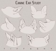 Ideas for how to draw a dog nose character design Animal Sketches, Animal Drawings, Art Sketches, Wolf Drawings, Furry Drawing, Cat Drawing, Dog Anatomy, Animal Anatomy, Anatomy Study