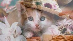 Super Funny Cats Slideshow Video LOL