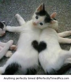 Assemble together beautiful kitten hearts | Perfectly Timed Pics