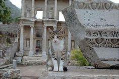 cat in cemetery
