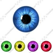 Image result for eye iris vector