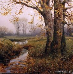 """Hale Road- Autumn - Renata Muccillo 11"""" x 11"""""""