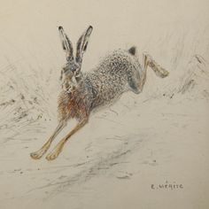 Hare running drawing - photo#18