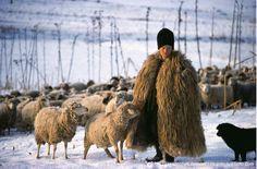 Transylvanian shepherd