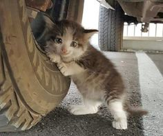 A kind-hearted man saw two little white boots under a truck by the tire and found a tiny kitten clinging to it. Her cat mother ran away and left her behind, so the man knew he had to step up to help.Meet Axel!Courtesy: JustAnotherGoodGuyShe was just hiding under the truck after the mama ran away. T...