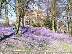 Flensburg Lutherpark