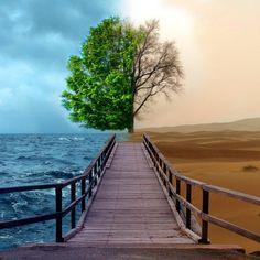 El contraste en nuestra naturaleza en efecto es radical.