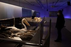 Land. Milk. Honey comprises a group of stainless steel cabinets filled with a collection of taxidermy, bones and skulls borrowed from the Steinhardt Museum of Natural History at Tel Aviv University. Natural World, Natural History, Agricultural Development, Sound Installation, Stainless Steel Cabinets, Dezeen, Places Around The World, Workplace, Venice