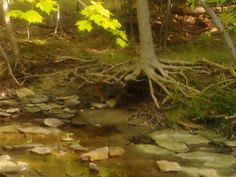 rivers and creeks are SO low, this year. Creek near Buttermilk Falls--in North Chagrin Reservation, OH