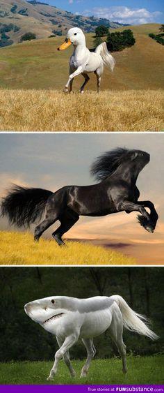 Photoshopped white horse/ duck                            Black horse/guinea pig                            White horse/ shark