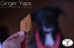 Ginger Yaps #DogTreat recipe from the Foodie Army Wife Great for the holidays or anytime!