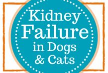Kidney Failure Treatment in dogs & cats. Chronic Kidney Disease (CKD) or Chronic Renal Failure is so common in pets and yet there are so few options. Dr. Ruth Roberts has a COMPREHENSIVE Kidney Health Program of information, videos and analysis of your pet's disease and straightforward methods you can start immediately.