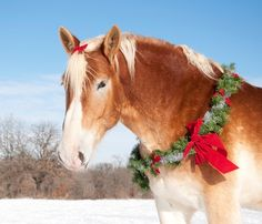 "BHS: ""A Horse is for Life, Not Just for Christmas"""