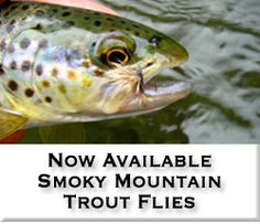 Video about Fly fishing for Brookies in the Great Smokey Mountains