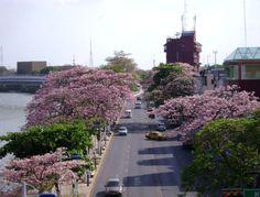 primavera en Villahermosa Tabasco