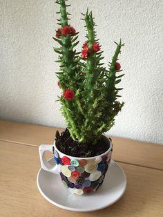 Bloempotje van oude kop en schotel en oude knoopjes Planter Pots