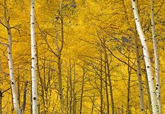 Yellow Peter Lik