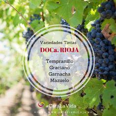 #vinosespañoles #curiosidadesdelvino #catalavida #wine #rioja #solariumrioja