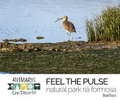 GUIDED NATURE TOURS Natural Park Ria Formosa All Year Round...