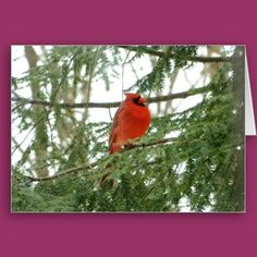 Bright red cardinal greeting/note card, blank inside to be personalized !