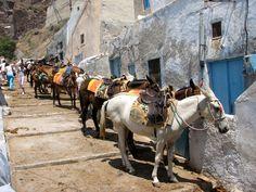 Donkeys in #Fira! #Santorini #Riding