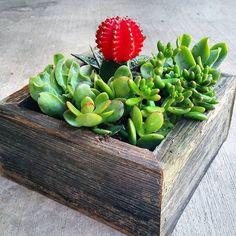 """Tuesday builds. #reclaimedwood #pallets #atx #succulents #handmade  #woodcraft #woodgrain @westelm @westelmdallas @west_elm_austin @sbsucculentart…"""