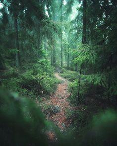 """12.3k Likes, 109 Comments - Juuso Hämäläinen (@juusohd) on Instagram: """"Into the Woods """""""