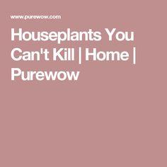 Houseplants You Can't Kill | Home | Purewow