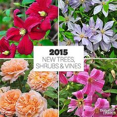 New Trees, Shrubs, and Vines for 2015