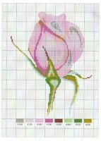 Gallery.ru / Фото #32 - Flowers - Mongia