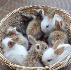 Precious basket of baby buns!