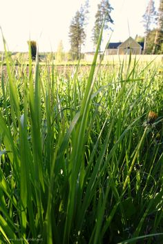 The grass by the road has grown long this week.