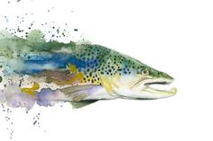 inspiration for water color trout tattoo (forearm)  Brown Trout Watercolor Print by TCsART on Etsy