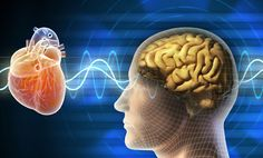 "How To Sharpen Your Brain With Your Heart: ""They discovered there is a distinct mode of harmonious physical and psychological functioning that promotes emotional stability and optimal cognitive performance, called ""heart coherence."" It's a state where heart-brain interactions, mind, emotions and nervous system are all in sync. They key to entering this coherent state is using our heart to sharpen our brain."" Click on the image to read the rest of the article"