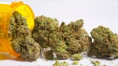 Canada's largest pharmacy chain has formally applied to be a distributor of medical marijuana.