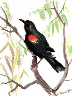 Red Winged Black bird, original watercolor painting, 12 X 9 in, original art, bird lover, bird painting, on Etsy, $24.00