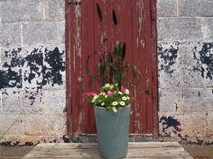 Millet, Hot Pink Verbena, Yellow Minifamous Calibrachoa