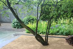 Luciano Giubbilei's Laurent-Perrier Garden after the rain