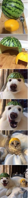 Feeling bored? Put fruit on your pets head! lol