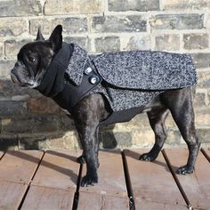 The City Coat - Adult Boys French Bulldog/Pug Dog Winter Coat
