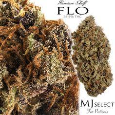 Flo - Classic Medical Marijuana strain available through @mjselect #cannabis #marijuana