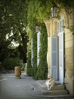 Rachael Mckenna. Pastel blue shutters. Stone. Vines. Lanterns. Luminous.