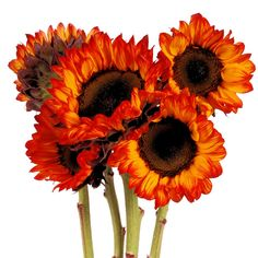 Burnt Orange #CAGrown Sunflowers are the perfect summer flower!