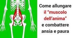 Tutti noi conosciamo le funzionalità dei muscoli principali del nostro corpo, ma in pochi conoscono l'importanza del muscolo Psoas (muscolo ileopsoas). Questo muscolo serve per la stabilizzazione del nostro corpo ed è fondamentale per il nostro equilibrio strutturale