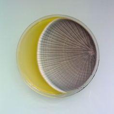 magical contamination: mould as art by antoine bridier-nahmias - designboom   architecture & design magazine