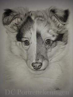 """Pup"" realistic portrait drawing made with pastelpencils"