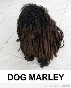 Meet Dog Marley